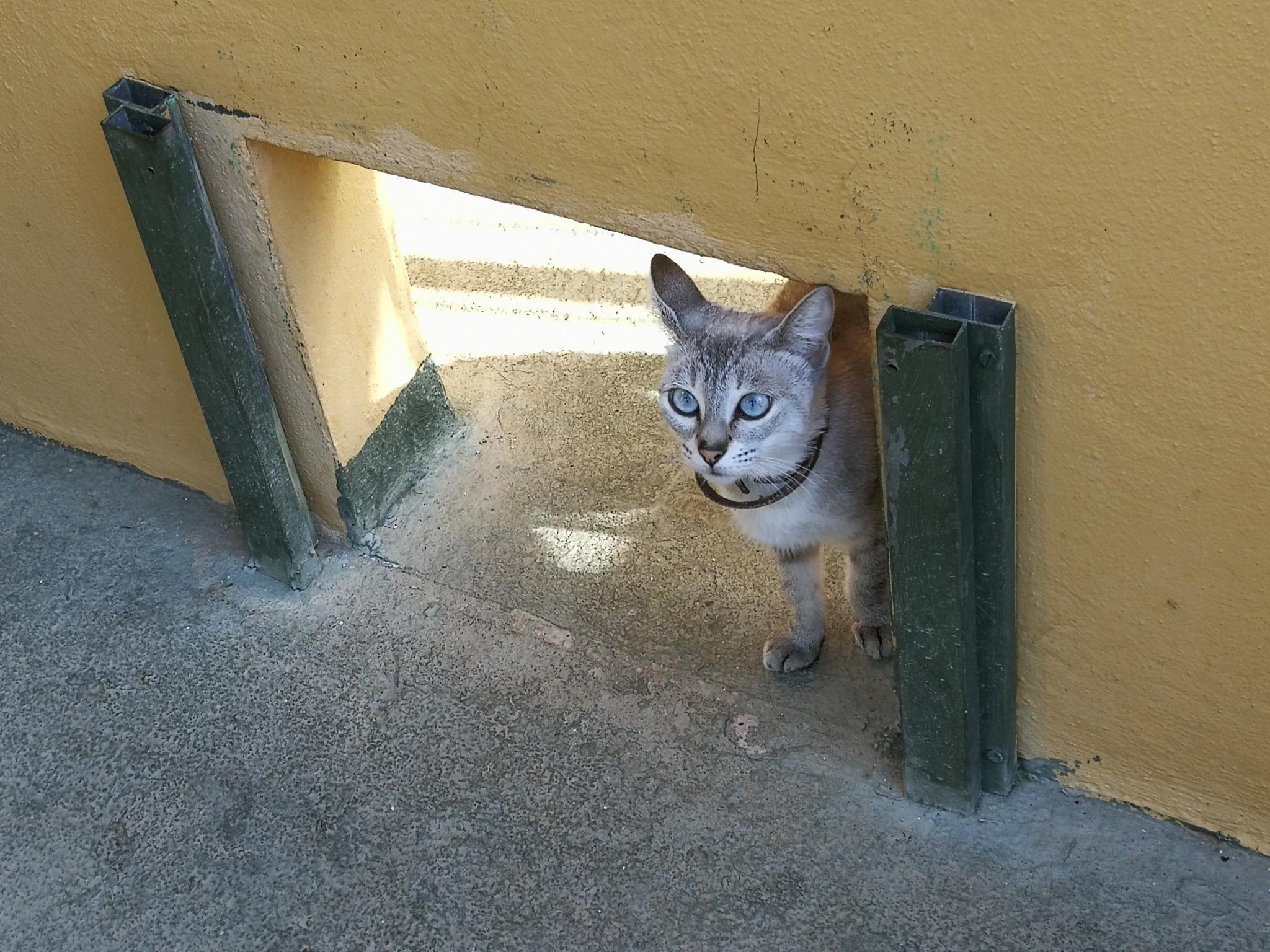 gatos en adopción en el Centre Sanitari Municipal de Protecció Animal Son Reus