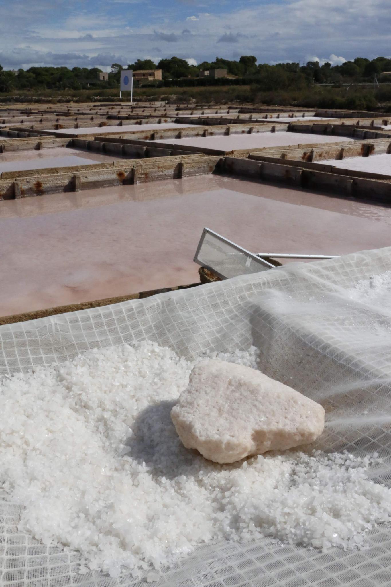 flor de sal salinera sal de es trenc