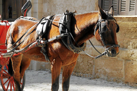 Cala Ratjada horse carriages to be banned
